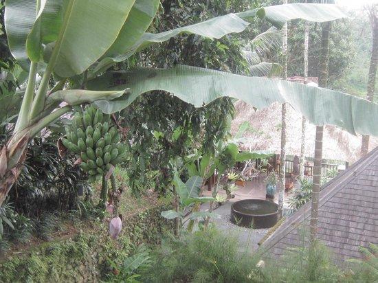 Komaneka at Tanggayuda:                   view from our room