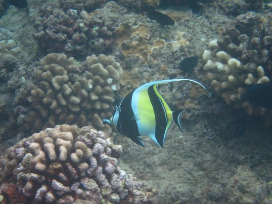 Ka'anapali Beach:                   Black Rock Snorkeling