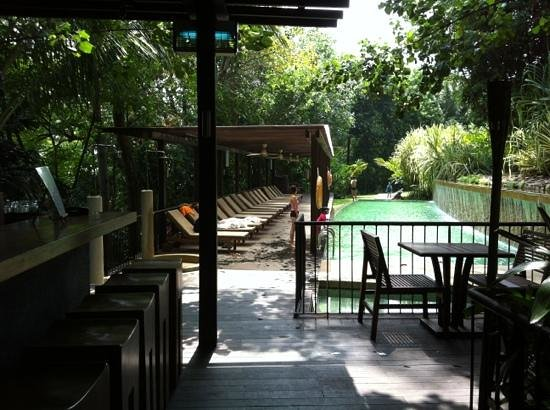 Amara Sanctuary Resort Sentosa:                   murky pool attracted a family regardless