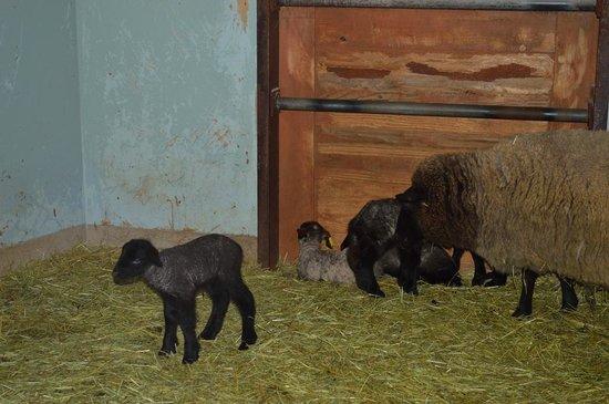 Bokka no Sato:                   子羊とお母さん