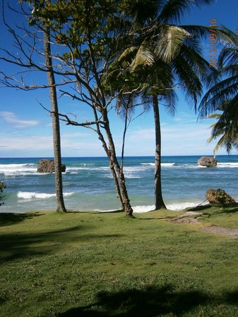 Royal Westmoreland:                   A beach