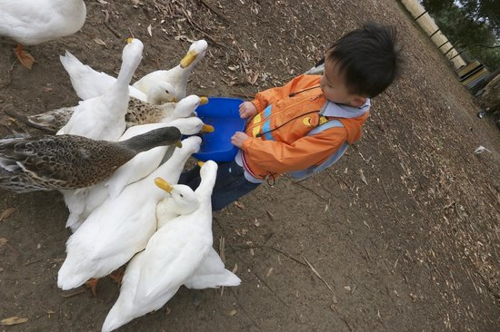 Diamond Forest Cottages:                   Feeding Ducks