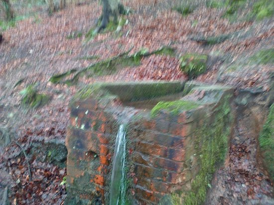 Redburn Country Park:                   The well.
