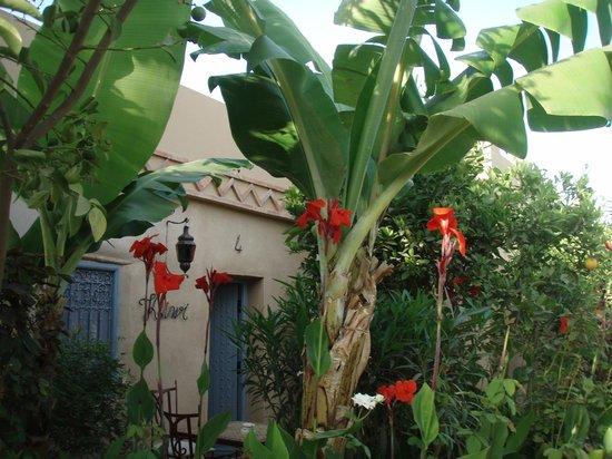 Hotel Dar Zitoune: Exotique