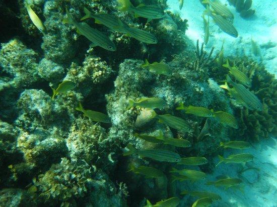 Coco Plum Island Resort:                   Amazing Snorkeling