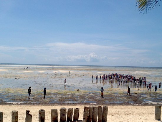 Jacaranda Beach Resort:                   Bassa marea dalla spiaggia