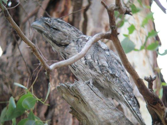 Melbourne Birding Tours