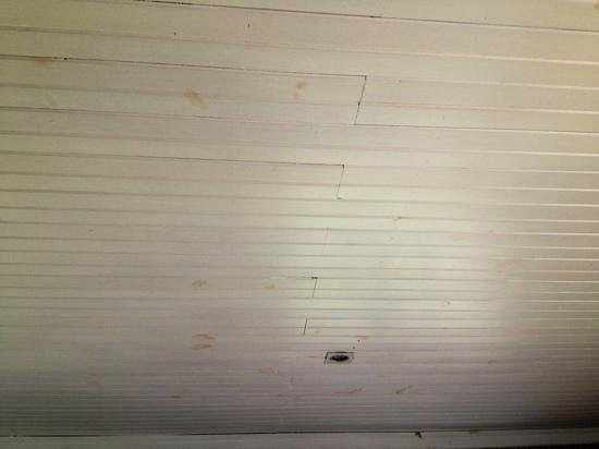 Camp Figtree:                                     not only the ceiling needs maintenance