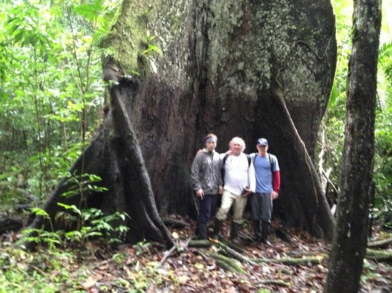 Amazonia Expeditions' Tahuayo Lodge:                   Largest Kapok Tree in the region.