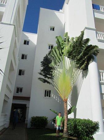Grand Bahia Principe Jamaica: ARBRE DU VOYAGEUR