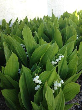 Villa Strandly : Flowers :-)