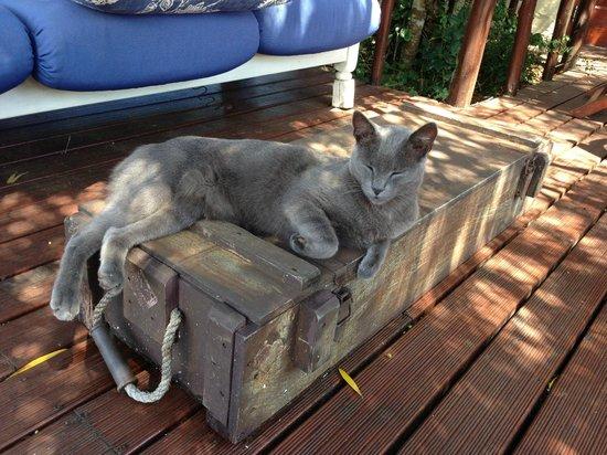 Sebumo Tude Nature's Lounge:                   Süsse Katze