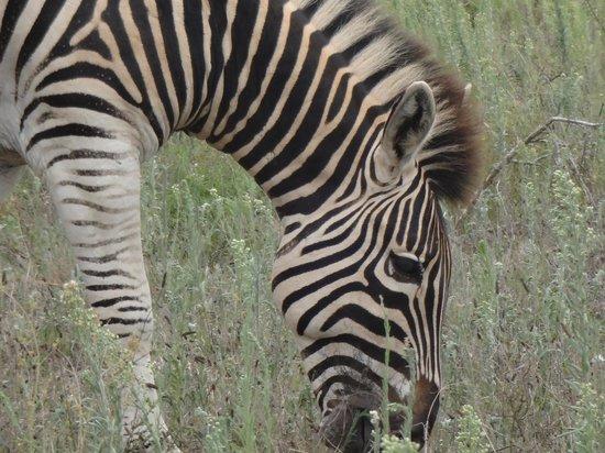 Dungbeetle River Lodge:                   Addo Elephant Park