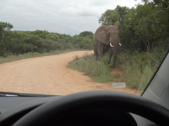 Dungbeetle River Lodge:                   Addo Elephant Park
