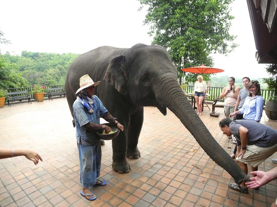 Anantara Golden Triangle Elephant Camp & Resort: Breakfest