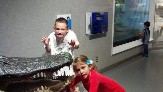 Corpus Christi Museum of Science and History:                                     Fun with the rhinos