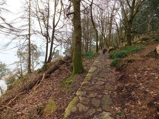 Plas Glyn y Weddw: Woodland walk