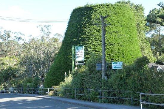 Bucket Tree Lodge: Bucket Tree