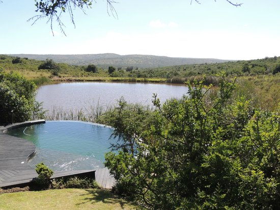 Kichaka Luxury Game Lodge:                   The view from the decking over the plunge pool and the watering hole