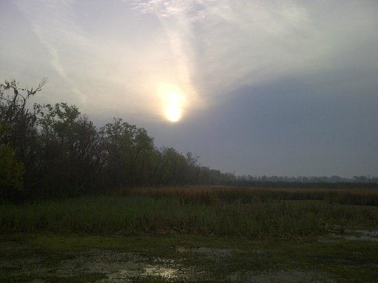 Grand Bayou Noir:                   Houma wetlands - dawn
