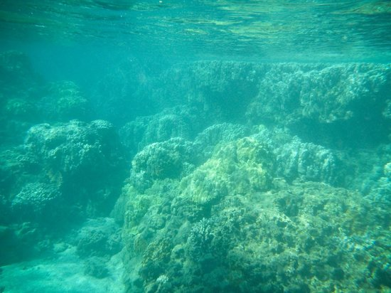 Maui Snorkel Tours:                   The reef
