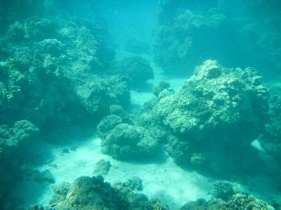 Maui Snorkel Tours:                   Falling and rising like mountains