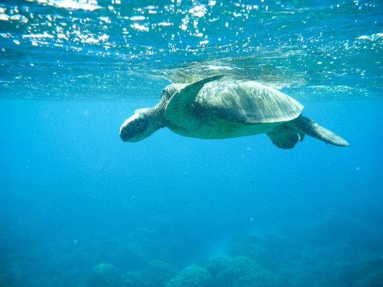 Maui Snorkel Tours:                   Gorgorgeous girl coming up to beathe                 