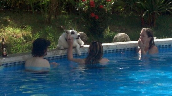 The Hideaway Hotel Playa Samara:                   Playing with Maxine in the pool