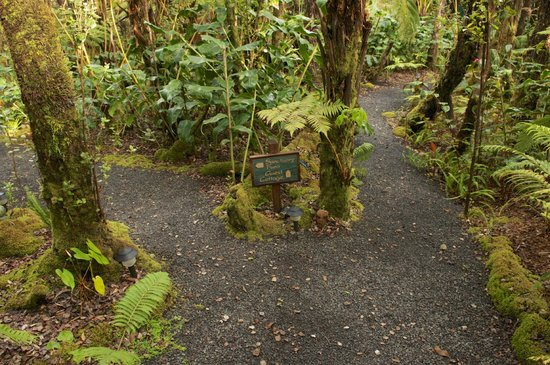 Volcano Rainforest Retreat:                                     Nice walk to the cabine