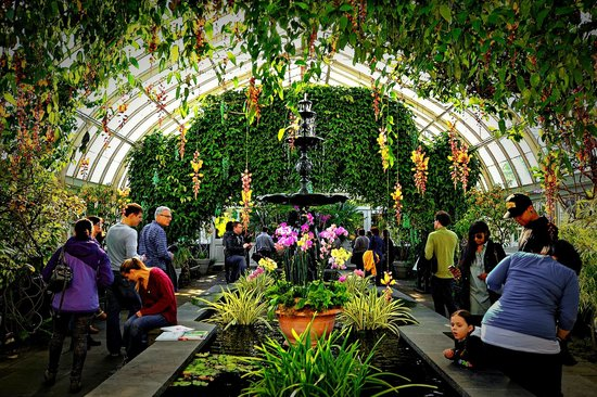 Orchid Show Picture Of New York Botanical Garden Bronx Tripadvisor