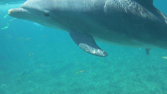 Melia Buenavista:                   Dauphin sauvage pris avec caméra sous l eau