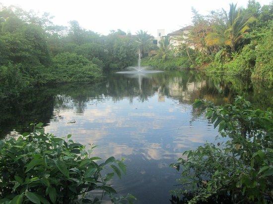 BlueBay Villas Doradas Adults Only:                   Pond area