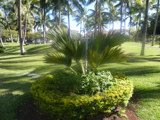 Fort DeRussy Beach Park:                   Palm inFort DeRussey