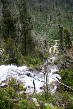 Steavensons Falls:                   Steavenson's Falls from the top