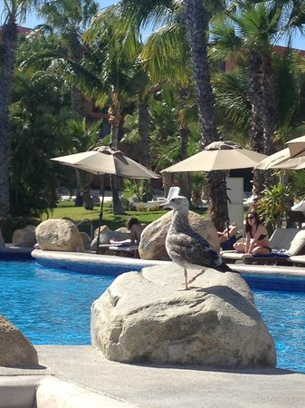 Melia Cabo Real All-Inclusive Beach & Golf Resort:                                     Bob the Bird