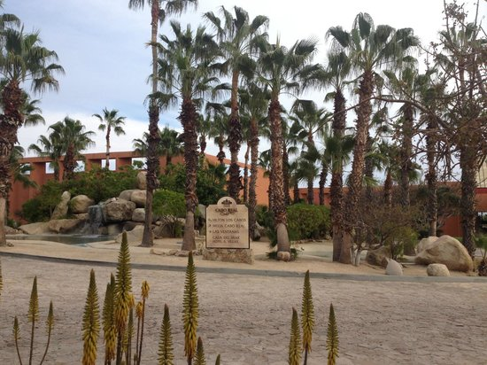Melia Cabo Real All-Inclusive Beach & Golf Resort:                                     Plant view