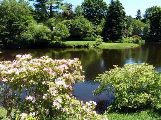 Asticou Azalea Garden: Beautiful pond