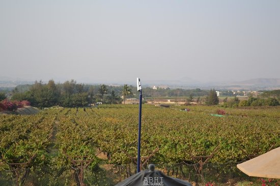 Sula Vineyards:                   SULA at its best! Huge yards of grapes all around..