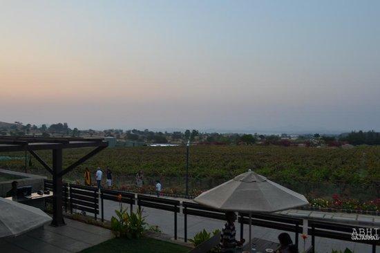 Sula Vineyards:                   Sula Yards just approaching sunset!
