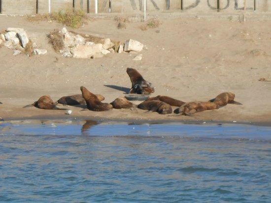 Crucero Anamora:                   reserva de lobos marinos