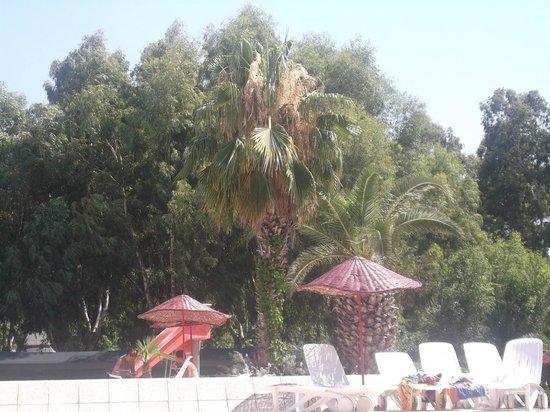 Club Okaliptus Tatil Koyu: крыша бара