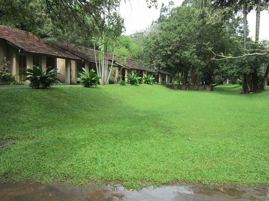 Sigiriya Village Hotel:                   View of the cottages