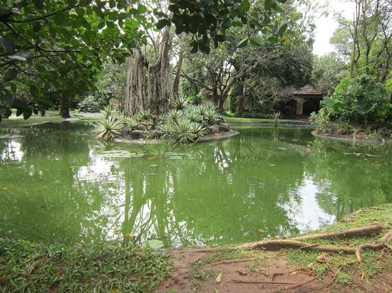 Sigiriya Village Hotel:                   Small pond at the entrance to the hotel