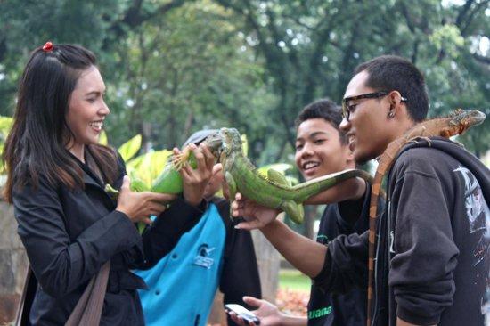 Taman Suropati:                   Iguana-lover communirt