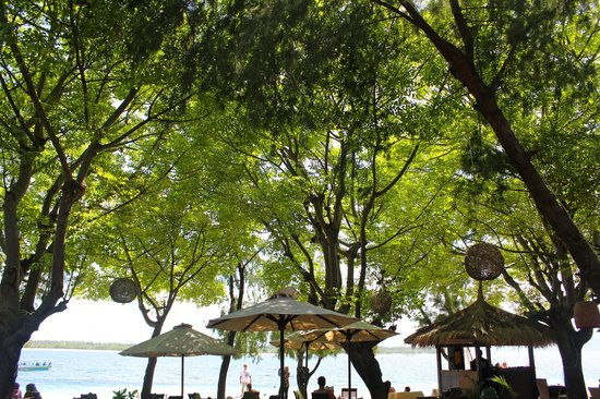 Gili Trawangan:                                     Under the shade