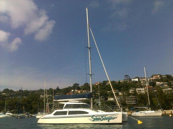 Champagne Sailing Sydney照片