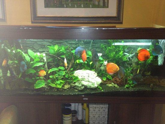 هوتل كامبليوني:                   acquario                 