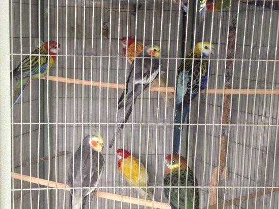 Hotel Campiglione:                   pappagallini