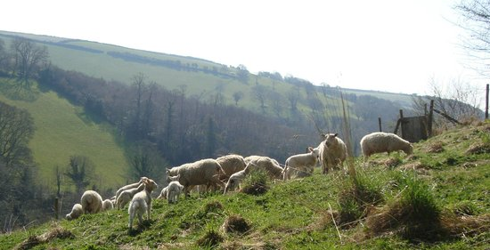 Watermill Cottages: Gara Valley from the sheep shed