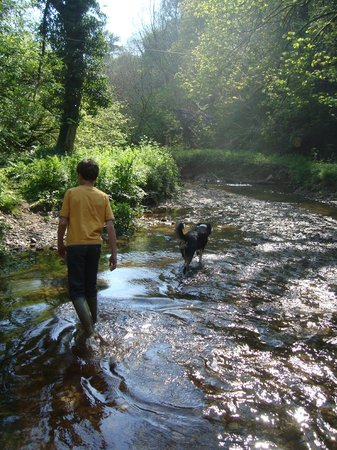 Watermill Cottages: stream walking with Sorrel dog in our 'Robin Hood Land'